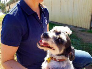 Bendora dog boarding Canberra